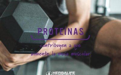 Proteinas, contribuyen a que aumente la masa muscular